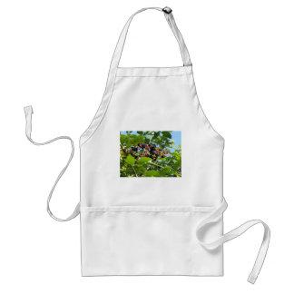 Blackberries bunch adult apron