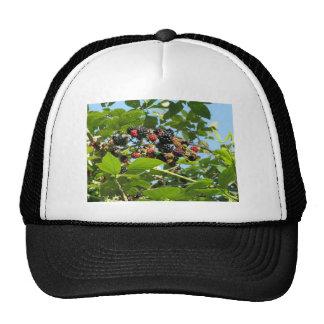 Blackberries bunch trucker hat