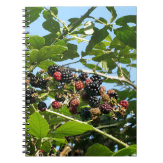 Blackberries bunch not yet fully ripened notebook