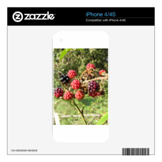 Blackberries bunch skin for the iPhone 4