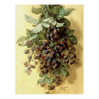 'Blackberries' by Paul de Longpré Postcard