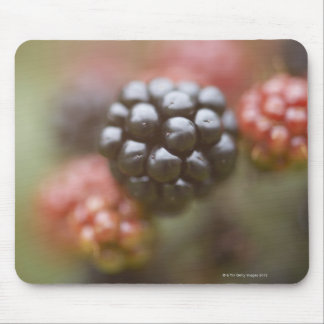 Blackberries close up. mouse pad