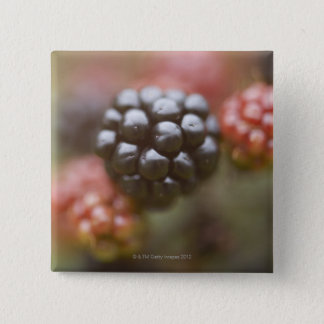 Blackberries close up. pinback button