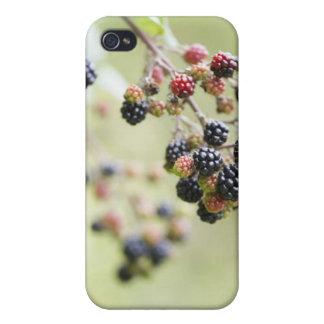 Blackberries growing outdoors. iPhone 4/4S covers