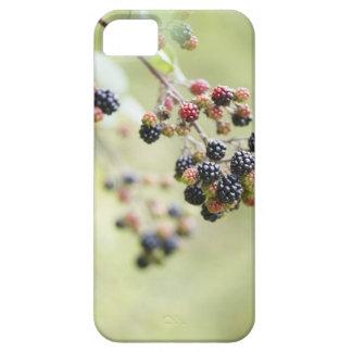 Blackberries growing outdoors. iPhone SE/5/5s case
