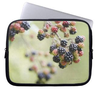 Blackberries growing outdoors. laptop sleeve