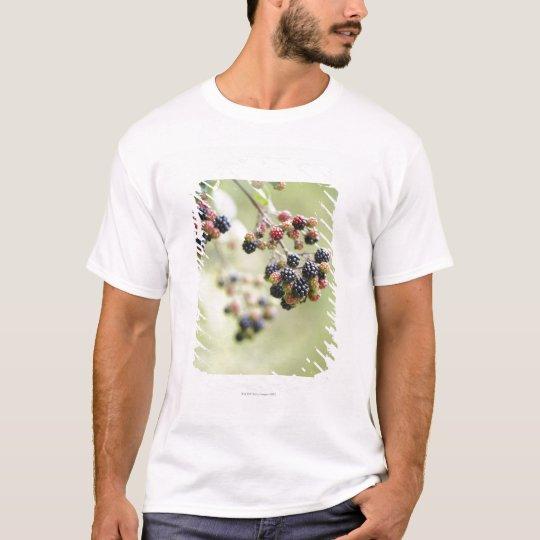 Blackberries growing outdoors. T-Shirt
