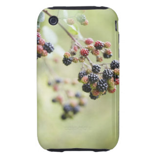 Blackberries growing outdoors. tough iPhone 3 cover