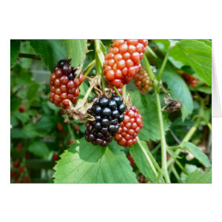 Blackberries! Notecard by Brad Hines