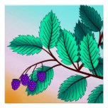 Blackberries on a branch poster