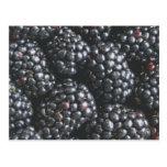 Blackberries Postcards