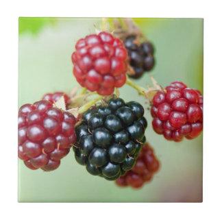 blackberries small square tile