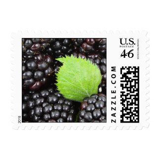 BlackBerry Background Stamps