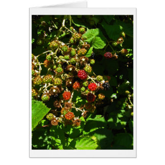 Blackberry Berries Slowly Ripen Card