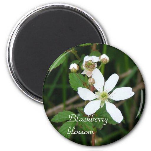 Blackberry blossom magnet