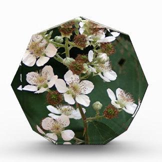 Blackberry blossoms in flower award