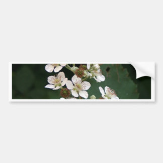 Blackberry blossoms in flower bumper sticker