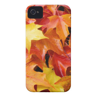 Blackberry Bold Phone Cases Autumn Leaves nature Case-Mate iPhone 4 Case