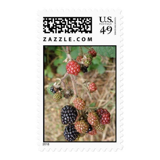 Blackberry Bonanza Postage Stamps