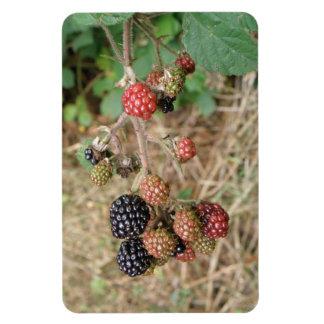 Blackberry Bonanza Premium Magnet