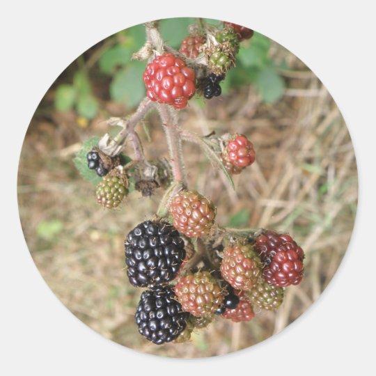 Blackberry Bonanza Stickers