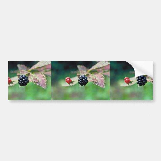 Blackberry Bumper Sticker
