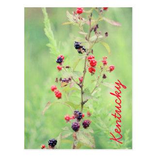 Blackberry Bush by JerseyFawn Postcard