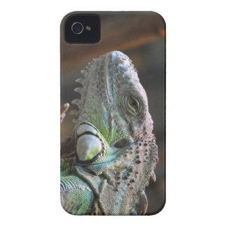 BlackBerry Case with head of Iguana lizard
