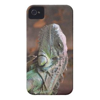 BlackBerry Case with Iguana lizard