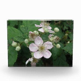 Blackberry Flowers Decorative Acrylic Award