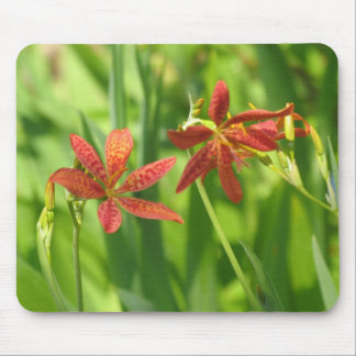 Blackberry Lilies Mouse Pads