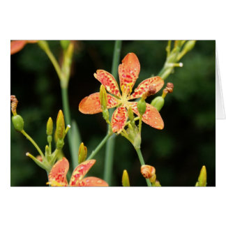 Blackberry Lily Note Cards