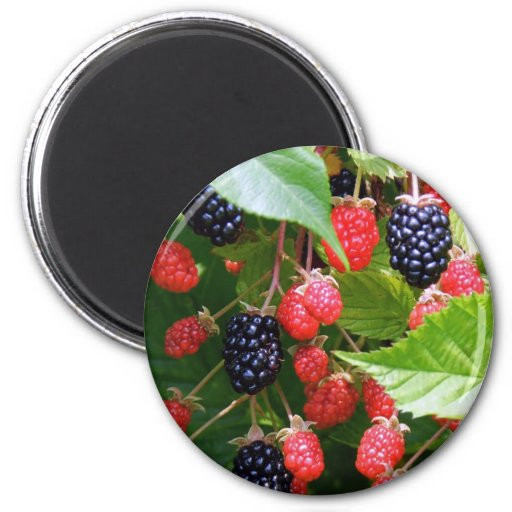 Blackberry Patch Fridge Magnets