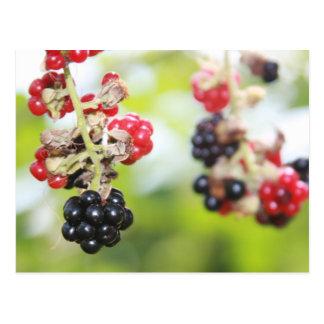 Blackberry Summer Postcard