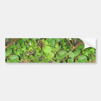 Blackberry vines berries leaves nature photo on car bumper sticker