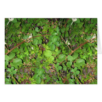 Blackberry vines berries leaves nature photo on card