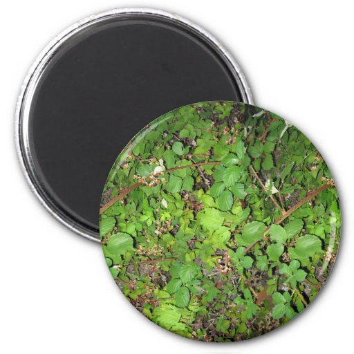 Blackberry vines berries leaves nature photo on magnets