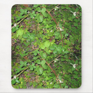 Blackberry vines berries leaves nature photo on mouse pad