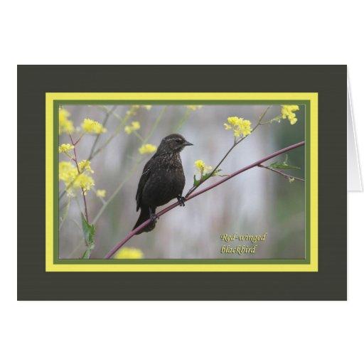 Blackbird_3489 de alas rojas felicitaciones