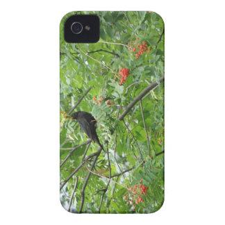 Blackbird and Berries Blackberry Bold Case