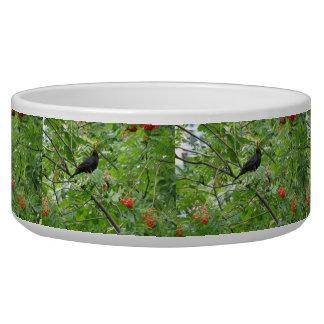 Blackbird and Berries Dog Bowl