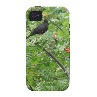 Blackbird and Berries iPhone 4 Case
