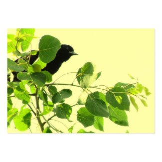 Blackbird ATC zazzle_profilecard