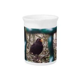 Blackbird behind bars, Animal, Birds, Black Bird Beverage Pitcher