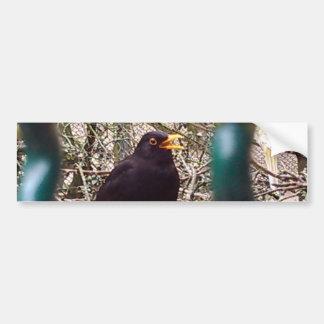 Blackbird behind bars, Animal, Birds, Black Bird Bumper Sticker