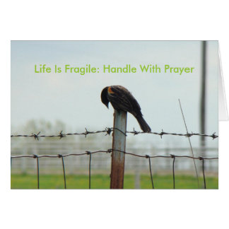 Blackbird Bowed, Life Is Fragile: Handle With P... Card
