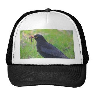 Blackbird Hat
