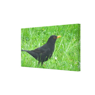 Blackbird image for Wrapped Canvas
