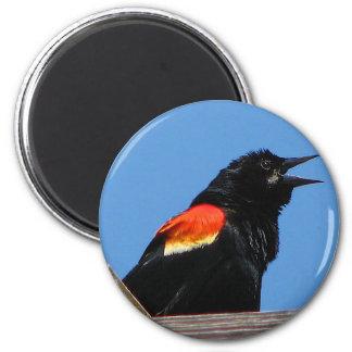 Blackbird Magnet