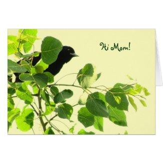 Blackbird Mothers Day Card